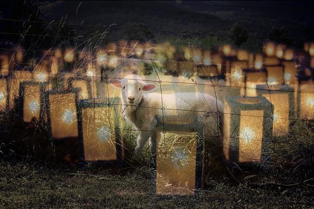 lamb-and-lamps