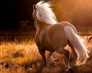 Pictures-of-Horses-Running-in-Field-2