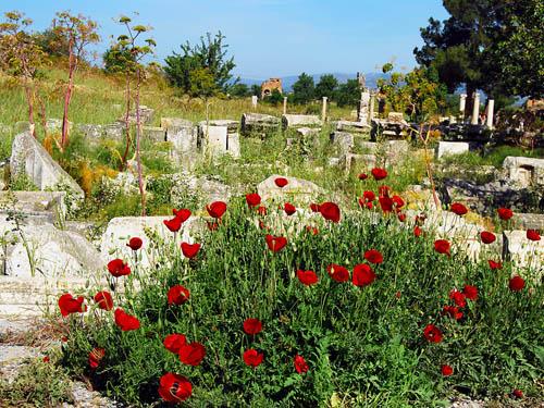 ephesus_ruins_flowers_68t